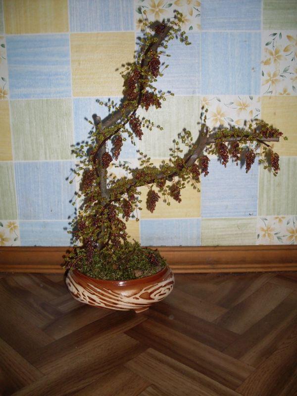Класс красивое виноградное дерево из