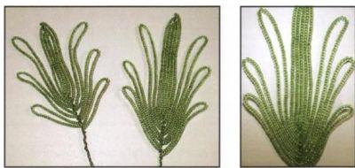 анемоны из бисера